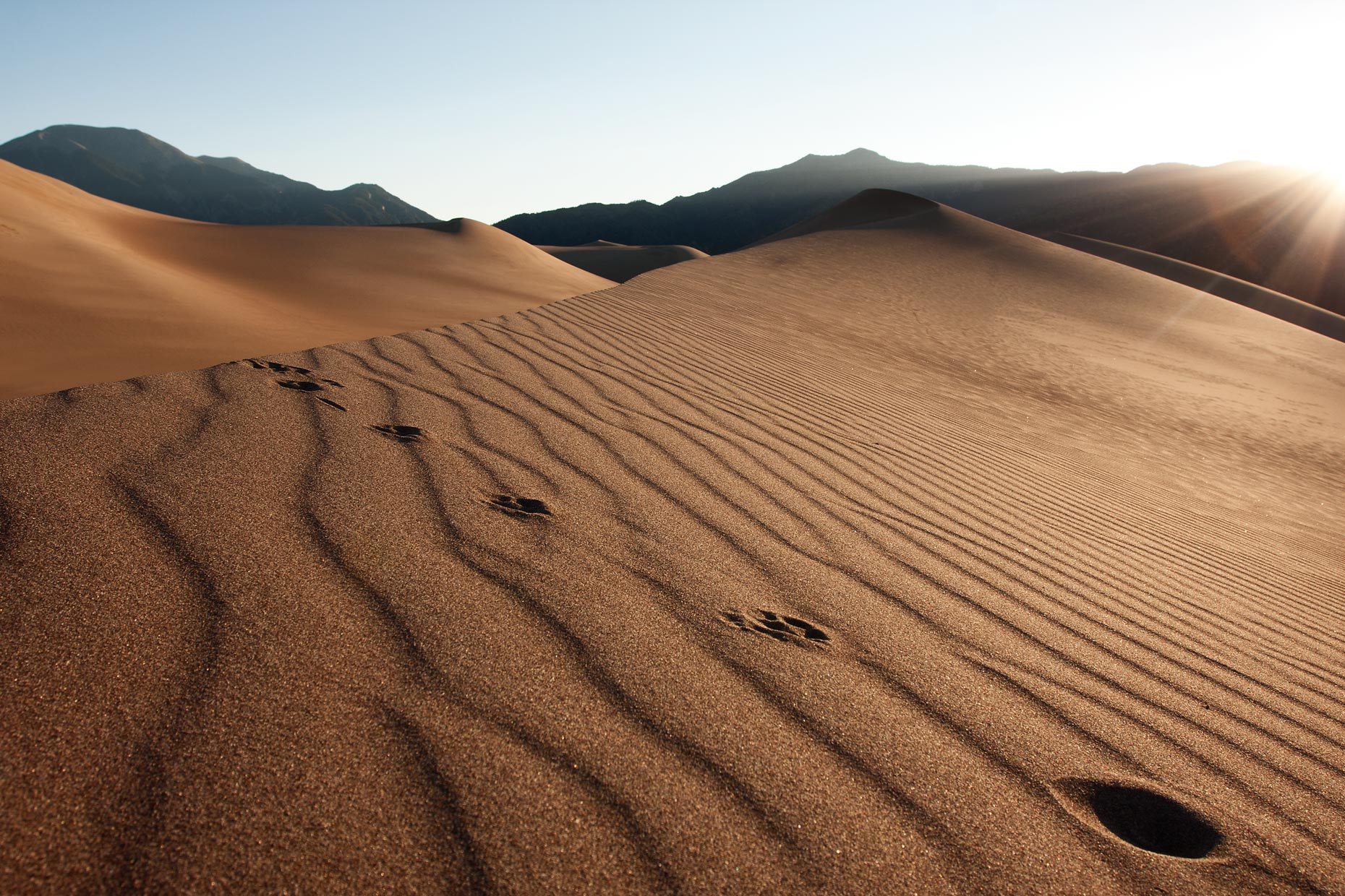 Places-great-sand-dunes-colorado-coyote-tracks